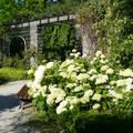 Botanischer Garten - München