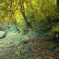 Sátoraljaújhely, Zsólyomka patak és környéke ősszel