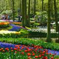 Holland, Keukenhof