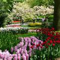 Holland, Keukenhof 2009  60 year