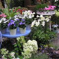 Francia virágáruda
