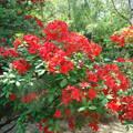 Rododendron-Jeli Arborétum