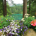 Grüner See, - Ausztria,  fotó; frőhlich
