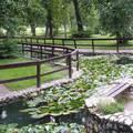 Miskolc, Békás-tó a miskolctapolcai parkban