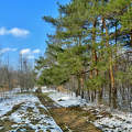 Cinkotai parkerdő,Fotó:Szolnoki Tibor