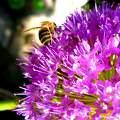 Dolgos méh