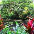 Hawaii,Oahu