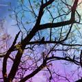 Madár, fa, fantázia, színek, montázs