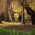 Ez egy 2005. novemberi kép, rajta a mosonmagyaróvári Rudolf-liget részlete  Bemutató: http://www.youtube.com/watch?v=EbOQEr9V6-g