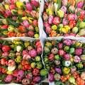 Hollandia, Amszterdam, úszó virágpiac, tulipáncsokrok 2016. április