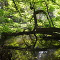 Vácrátóti Arborétum