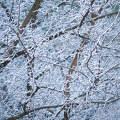 Fagyos világ, zúzmara, tél