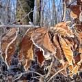 Normafa tél_3_zúzmara