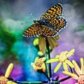 Fantázia, montázs, pillangó, tavasz