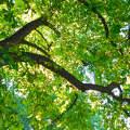 A miskei fák alatt...