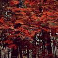 Ősz, fa, erdő