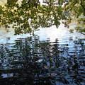 Plitvicei tavak - tükröződés