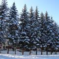 Szalajkavölgy bejárata 2010 február