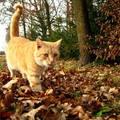 macska, ősz, cicaséta :-)