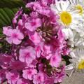 Virág csokor. Fotó: Csonki