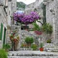 Mediterrán oázis a kövek között, Ston, Horvátország
