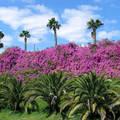 Virágfal, Gran Canaria