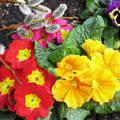 Tavaszi ébredés