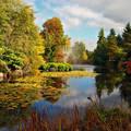 Japánkert ősszel