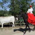 Sissy a Lázár lovasparkban Domonyvölgy