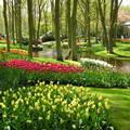 Hollandia Keukenhof