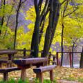 Erdei, őszi hangulatban...