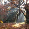 Szarvas - Arborétum ( Pepi kert ) - ősz - lombhullás a tölgyesben -  Fotó: Kőszály