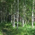 Finnország - Szauna felé