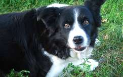 Haarlem - Holland, Border Collie Romy