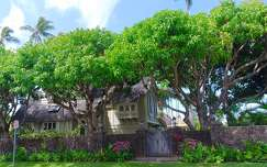 Hawaii,Kahala Avenue