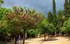 GRANADA-SPAIN, next to Alhambra