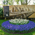Holland, Keukenhof, Thema NEW YORK