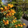 Irish National . Japanese Gardens,